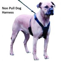 Non Pull Dog Harness - Stop Pulling Now